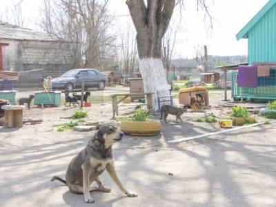 Аграрно-технологический факультет ПГУ помогает животным из приютов